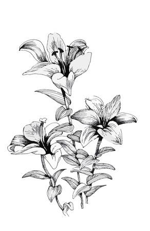 single flower: Beautiful monochrome, black and white flower isolated. Hand-drawn contour lines strokes