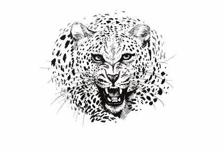 Angry leopard muzzle, black and white sketch.