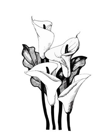 Calla lelie bloemen, zwart-wit afbeelding achtergrond. Stock Illustratie