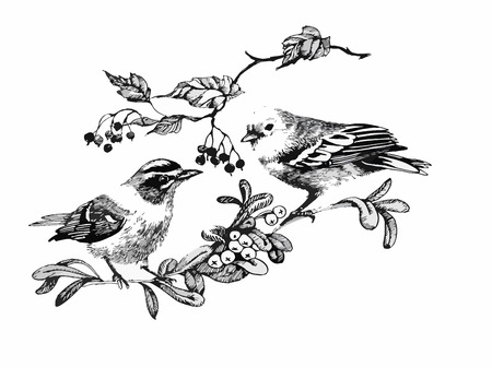 Black and white watercolor illustration of bird on twig.