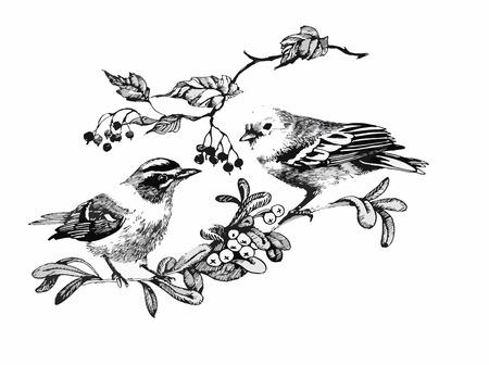 Zwart-wit aquarel illustratie van de vogel op takje.