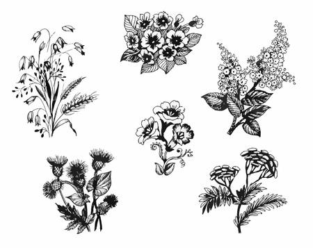 Summer garden blooming flowers, black and white illustration set.