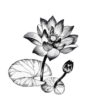 Water lily flowers on pond black and white illustration.