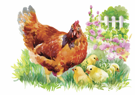 brooder: Watercolor Hen and chicks in yard vector illustration.