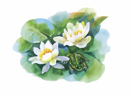 rana: Acuarela Modelo de flores blanco-lilly agua con la rana en el estanque de la ilustración vectorial. Vectores
