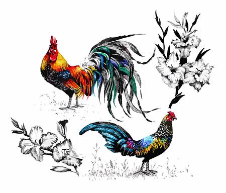 gallo: Patrón de la acuarela perfecta con gallos granja siluetas y flores.