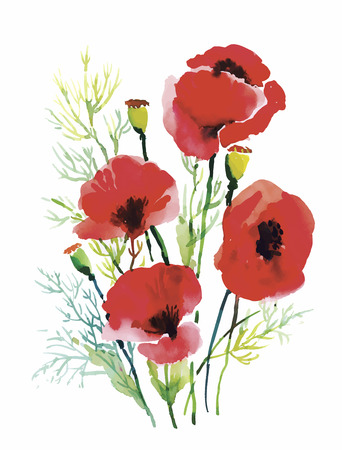 Red watercolor poppies flowers isolated on white background