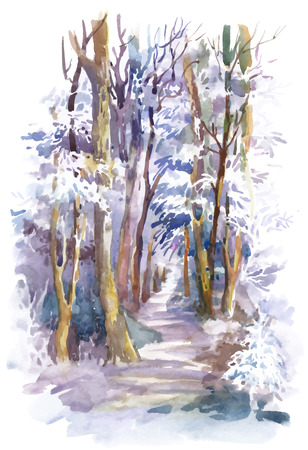 winter forest: Watercolor winter forest with trees Illustration