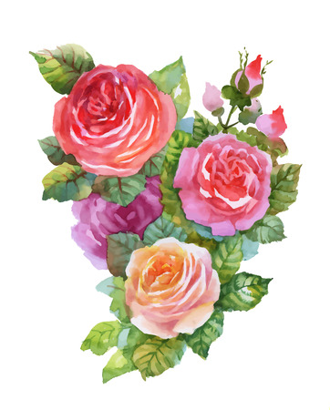 Aquarell Garten rote Rosen-Darstellung auf weißem Hintergrund blühen Standard-Bild - 61634952