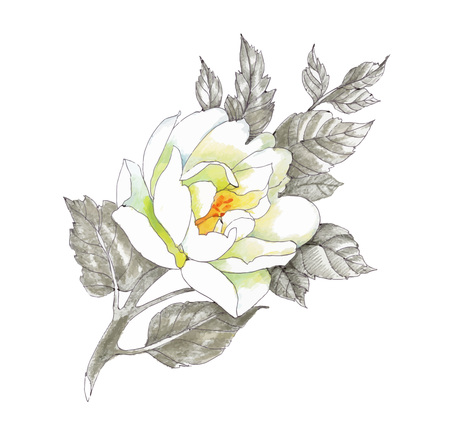pencil drawings: Hand drawing flower isolated on white background
