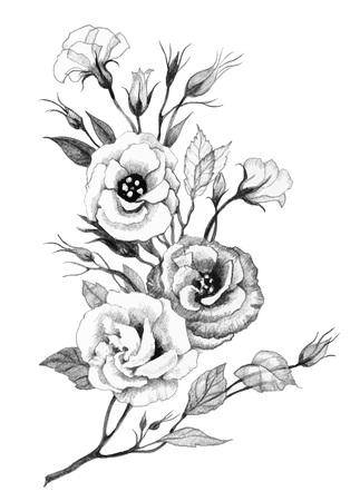 Dessin à la main fleur isolé sur fond blanc Vecteurs