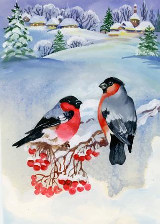 birds on branch: Bullfinch birds on snowy tree branch. Watercolor illustration.