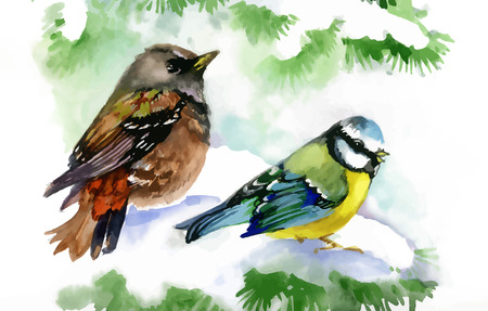 tweeting: Watercolor forest birds on snowy fir tree branch Illustration