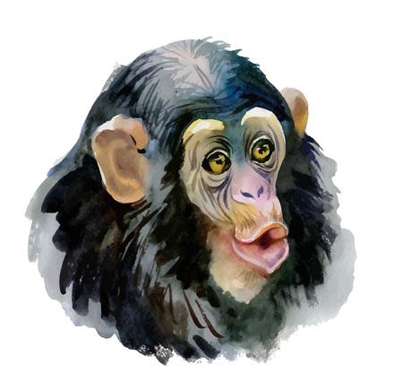 Monkey oriental animal ink painting illustration.