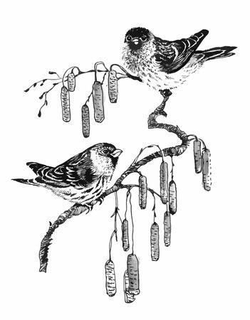 Birds on twig sketch illustration.