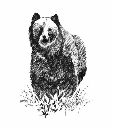 Grizzly bear animal, hand drawn sketch Иллюстрация