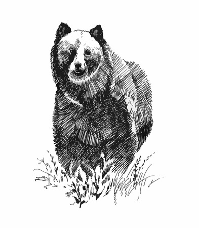 Grizzly bear animal, hand drawn sketch Illustration