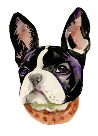 French Bulldog muzzle watercolor illustration Vettoriali