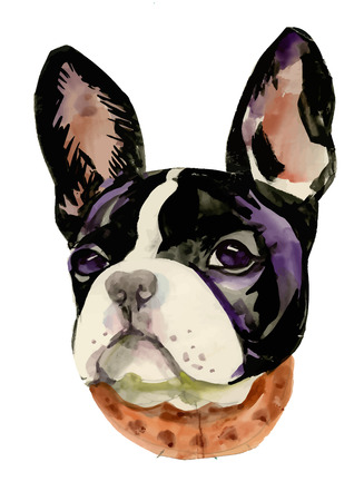 French Bulldog muzzle watercolor illustration Ilustracja
