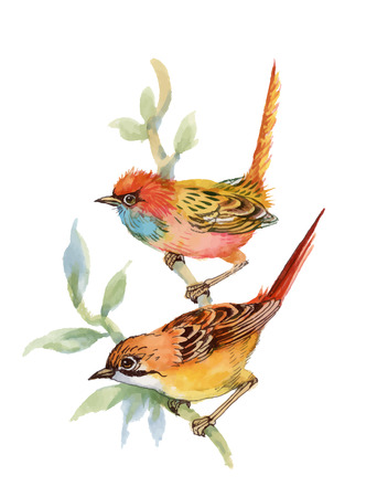 a twig: Watercolor forest birds on twig Illustration