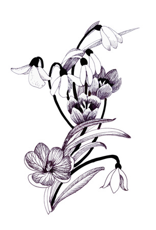 Sketched snowdrops flowers on white background