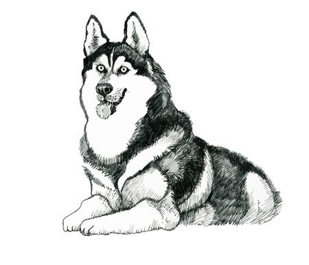 Bosquejado ronca mano ilustración dibujada perro