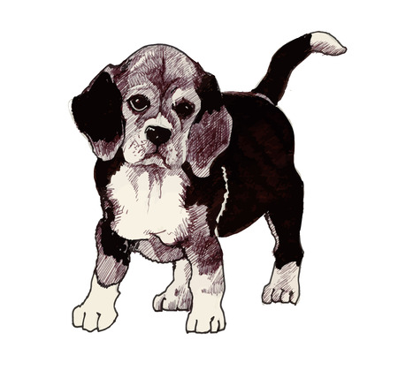 hound: sketched hound Puppy dog hand drawn illustration Illustration