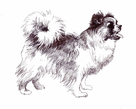 Sketched Puppy dog hand drawn illustration 일러스트