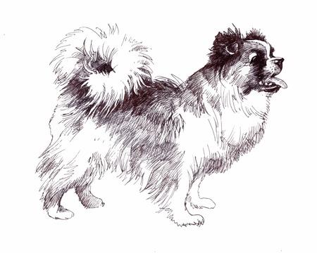 Sketched Puppy dog hand drawn illustration Illustration