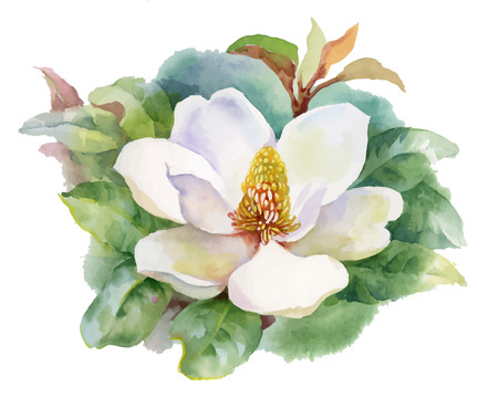 Watercolor Summer blooming white magnolia flower Vettoriali