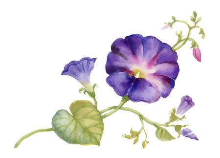 Watercolor Summer garden blooming Bind Weed buds flowers