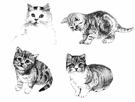 Black and white cats and kittens set inkn hand drawn illustration