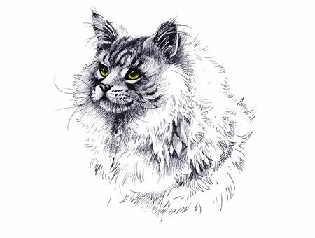 longhair: Black and white longhair cat ink hand drawn illustration