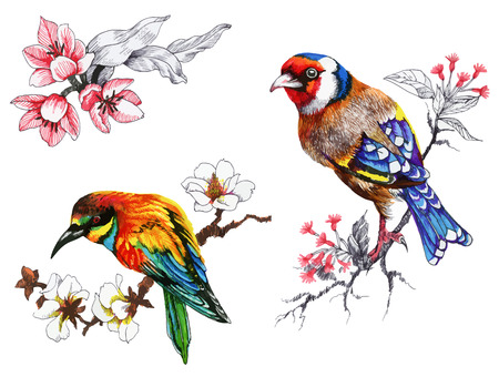 Bright birds on branches with flowers ink hand drawn illustration Ilustracja
