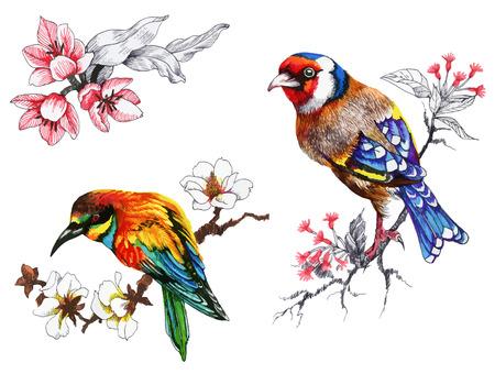 pájaros brillantes en las ramas con flores ilustración de la mano de tinta dibujado
