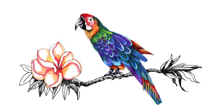 twig: Beautiful colorful parrot on twig Illustration