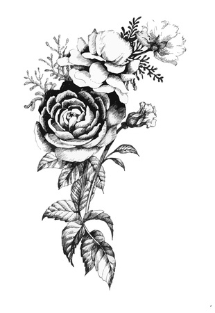 Hand drawn garden rose flower isolated on white background