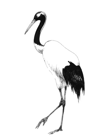 Hand drawn stork on white background