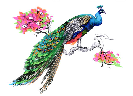 Watercolor drawing peacock on blooming tree branch on white background Ilustração