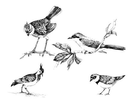 exotic birds: Wild exotic birds set illustration