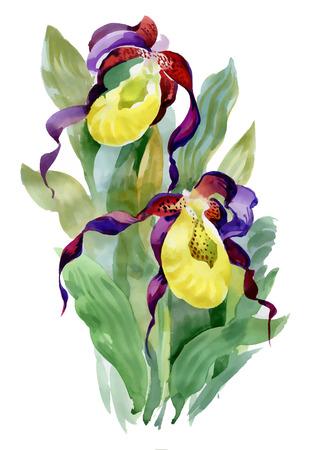 Hand drawn iris flowers on white background.