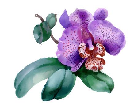 Garden orchid flower on white background Ilustração
