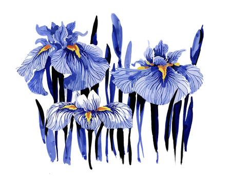 Hand drawn blue iris flowers on white background. Illustration