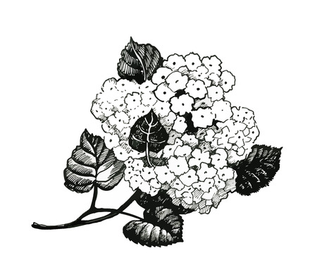 Hand drawn painting with black and white flowers on white background.