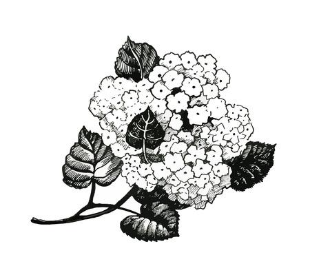 Hand getekend schilderij met zwarte en witte bloemen op witte achtergrond.