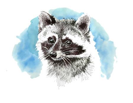 Raccoon cartoon style portrait.Cute art print for kids room wall decoration. Illustration