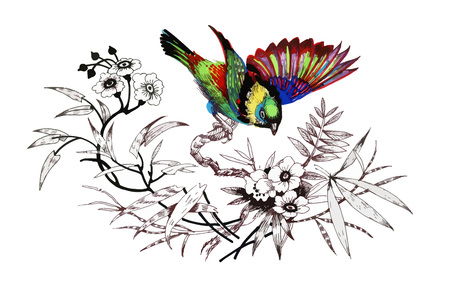 Watercolor drawing bird, artistic painting on white background.
