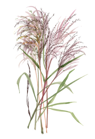 Hand drawn painting with field plants on white background.