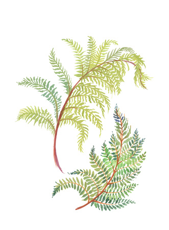 Hand drawn painting with colorful branches of fern on white background. Illustration