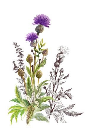 手には、白い背景で隔離の美しい野の花が描かれました。  イラスト・ベクター素材
